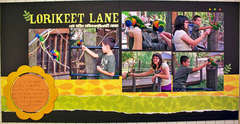 Lorikeet Lane