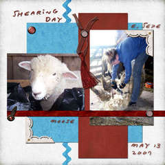 Shearing Day 2007