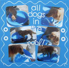 All Dogs in the Pool!