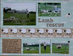 Lamb rescue p7