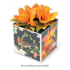 Nature's Gift Box by Susan Tierney-Cockburn