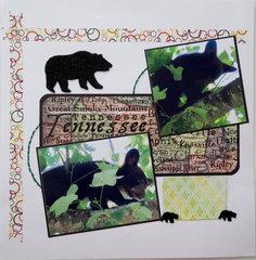 Bear Cub at Campground