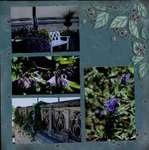 Biltmore Estate Garden