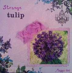 Strange tulip...