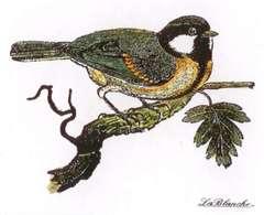 LaBlanche Chickadee