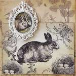 LaBlanche Resting Rabbit