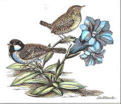 LaBlanche Springbirds