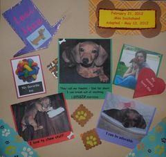 Lexi Mae - My Dachshund Puppy