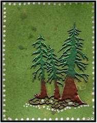 Spruce Tree Trio