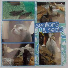 Sealions & Seals
