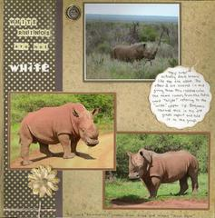 White Rhinos are not White