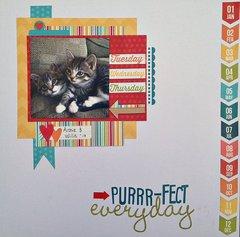 Purrr-fect Everyday