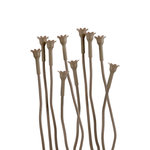 We R Memory Keepers - Flower Stem Kit - Stick Brown