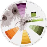 Bazzill Basics Monochromatic Color Wheel, CLEARANCE