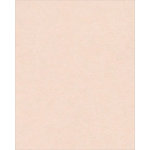 Bazzill Basics - Bulk Cardstock Pack - 25 Sheets - 8.5x11 - Twig