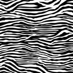 Canvas Corp - Black and White Collection - 12 x 12 Paper - Zebra