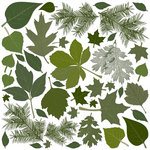 Creative Imaginations - Great Outdoors Collection - Die Cut Pieces - Spring Leaves