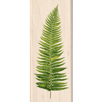 Inkadinkado - Photo Realistic Collection - Wood Mounted Stamps - Fern