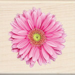 Inkadinkado - Photo Realistic Collection - Wood Mounted Stamps - Pink Gerbera Daisy