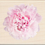Inkadinkado - Photo Realistic Collection - Wood Mounted Stamps - Pink Carnation