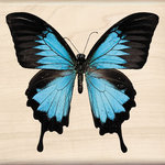 Inkadinkado - Photo Realistic Collection - Wood Mounted Stamps - Ulysses Swallowtail