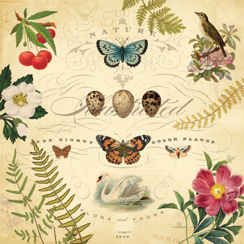 K and Company - Flora and Fauna Collection - 12 x 12 Paper with Foil Accents - Nature Illustration
