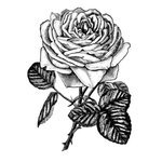 LaBlanche - Foam Mounted Silicone Stamp - Rose Blossom