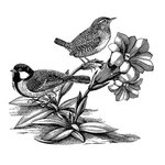 LaBlanche - Foam Mounted Silicone Stamp - Springbirds