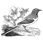 LaBlanche - Foam Mounted Silicone Stamp - Watchful Bird