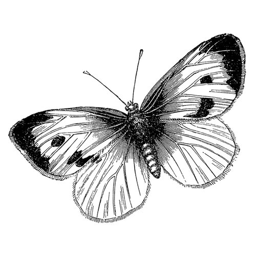 LaBlanche - Foam Mounted Silicone Stamp - Large Butterfly