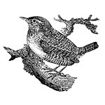 LaBlanche - Foam Mounted Silicone Stamp - Wren