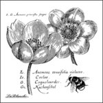 LaBlanche - Foam Mounted Silicone Stamp - Anemones
