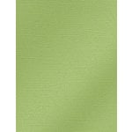 My Colors Cardstock - My Mind's Eye - 8.5 x 11 Glimmer Cardstock - Willow Green