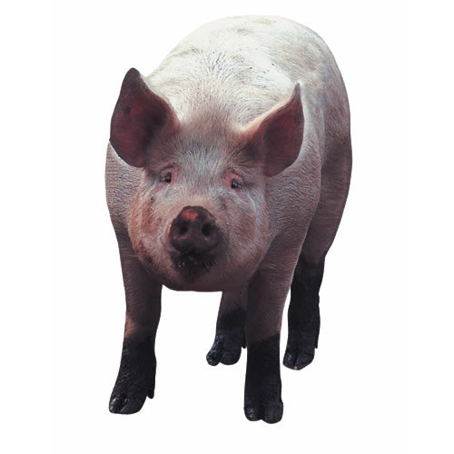 Paper House Productions - Farm Collection - Mini Die Cut Piece - Pig