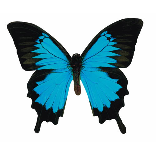Paper House Productions - Butterfly Collection - Mini Die Cut Piece - Mountain Blue Butterfly