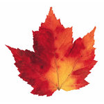 Paper House Productions - Autumn Collection - Mini Die Cut Piece - Maple Leaf Variegated