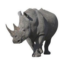 Paper House Productions - Africa Collection - Mini Die Cut Piece - Rhinoceros