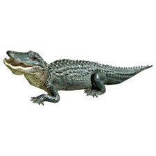 Paper House Productions - Florida Collection - Mini Die Cut Piece - Alligator