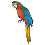 Paper House Productions - Pirate Collection - Mini Die Cut Piece - Parrot