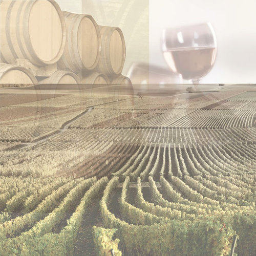 Paper House Productions - Wine Country Collection - 12 x 12 Paper - Wine Country Collage