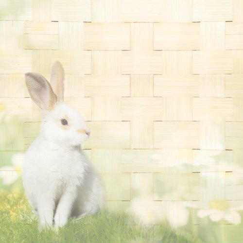 Paper House Productions - Easter Collection - 12 x 12 Paper - Easter Bunny