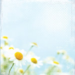 Paper House Productions - Floral Collection - 12 x 12 Paper - Bright Daisies