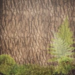 Paper House Productions - Summer Camp Collection - 12 x 12 Paper - Tree Bark