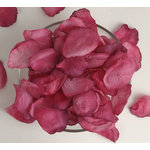 Petaloo - Botanica Collection - Floral Embellishments - Rose Petals - Fuchsia