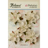 Petaloo - Textured Elements Collection - Christmas - Floral Embellishments - Burlap Poinsettias - Ivory