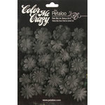 Petaloo - Color Me Crazy Collection - Black Chalkboard - Mini Delphiniums