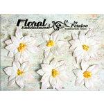 Petaloo - Canterbury Collection - Poinsettia Blossoms - White