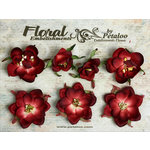 Petaloo - Canterbury Collection - Magnolia Blossoms - Burgundy