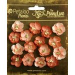 Petaloo - Penny Lane Collection - Floral Embellishments - Forget Me Nots - Antique Peach