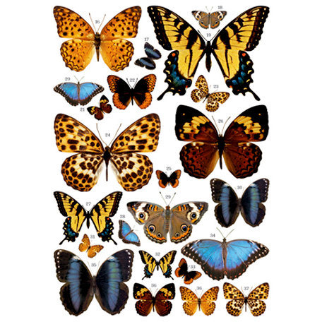 7 Gypsies - Rub Ons - Color - Butterflies
